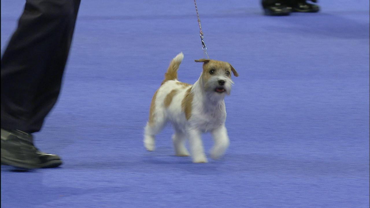 National Dog Show Live Streaming